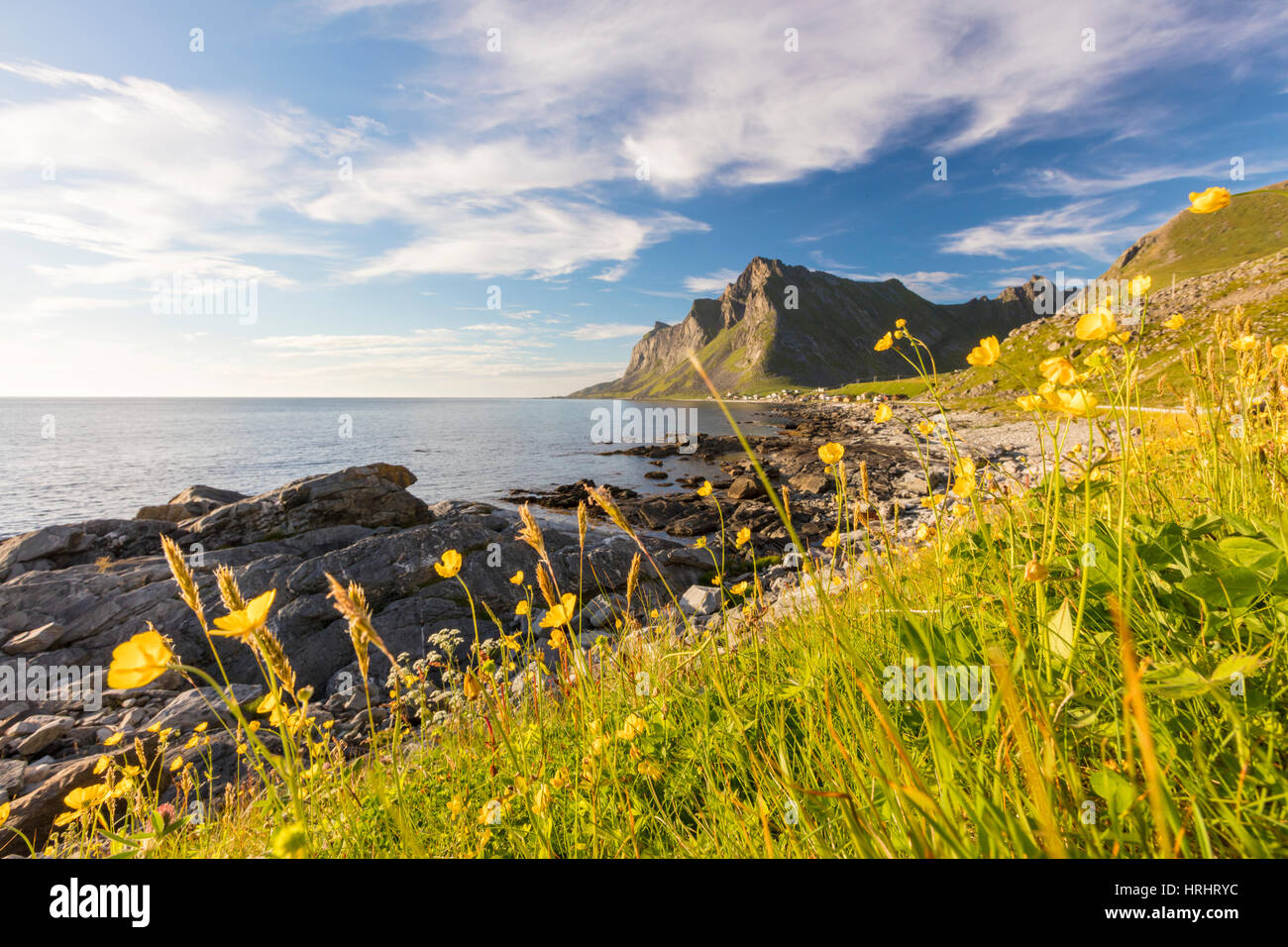 The sun shines on green meadows and flowers surrounded by sea at night, Vikten, Nord Trondelag, Lofoten, Norway, - Stock Image