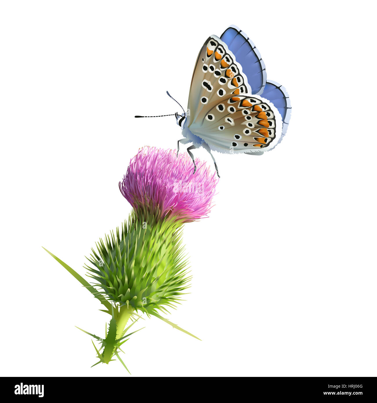 Butterfly Adonis blue on Thistle flower. Hand drawn digital illustration on white background. - Stock Image