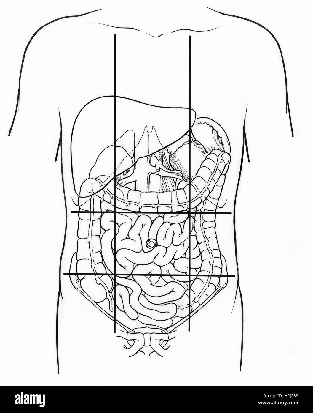 Illustration Of Nine Abdominal Regions