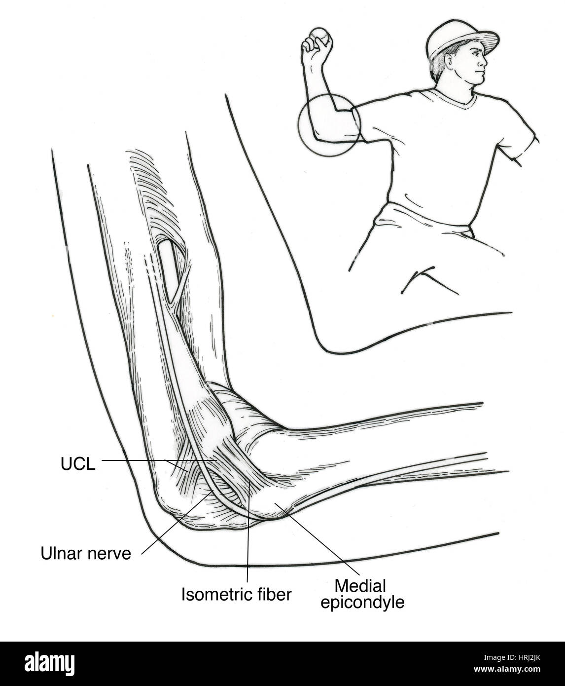 Baseball Pitching Anatomy Stock Photos & Baseball Pitching Anatomy ...