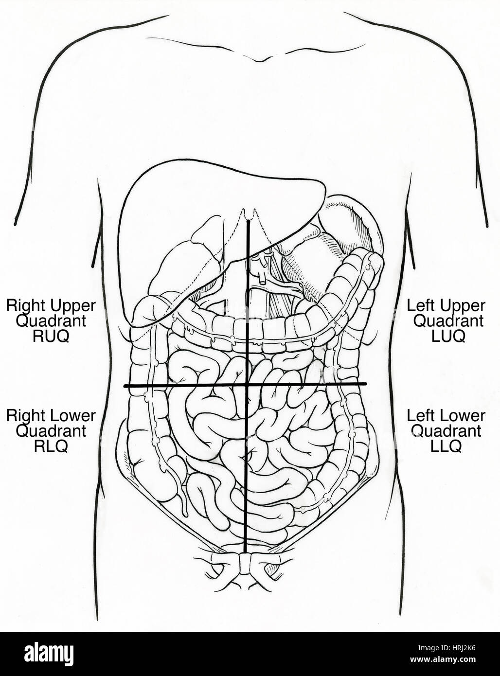 Illustration of Abdominal Quadrants - Stock Image