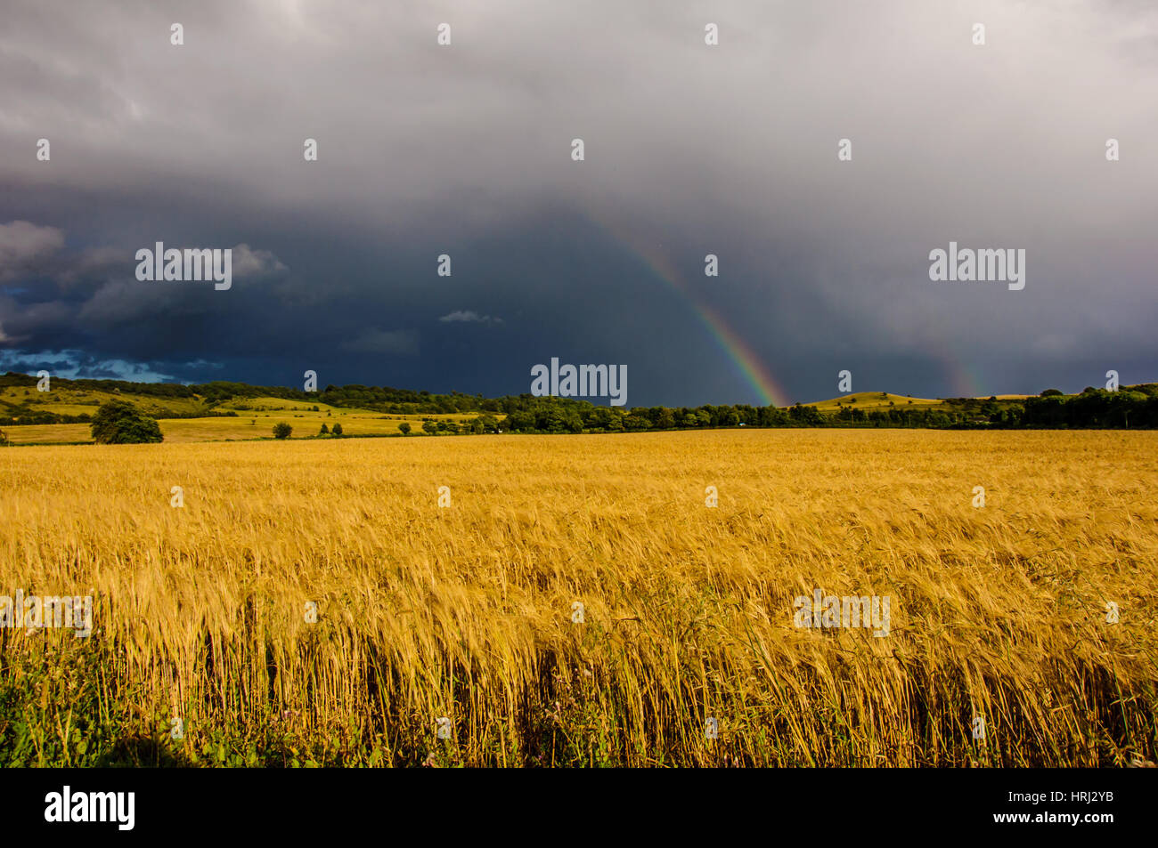 Image of two rainbows after heavy rain above corn field at Bedfordshire next to Ivinghoe village. - Stock Image