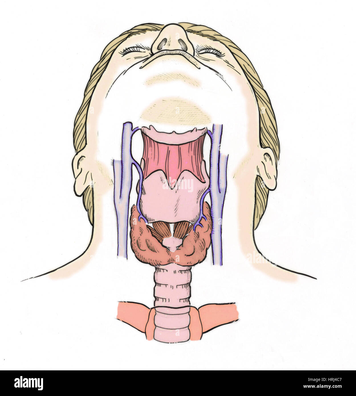 picture-of-throat-anatomy-the-most-hardcore-porn-ever