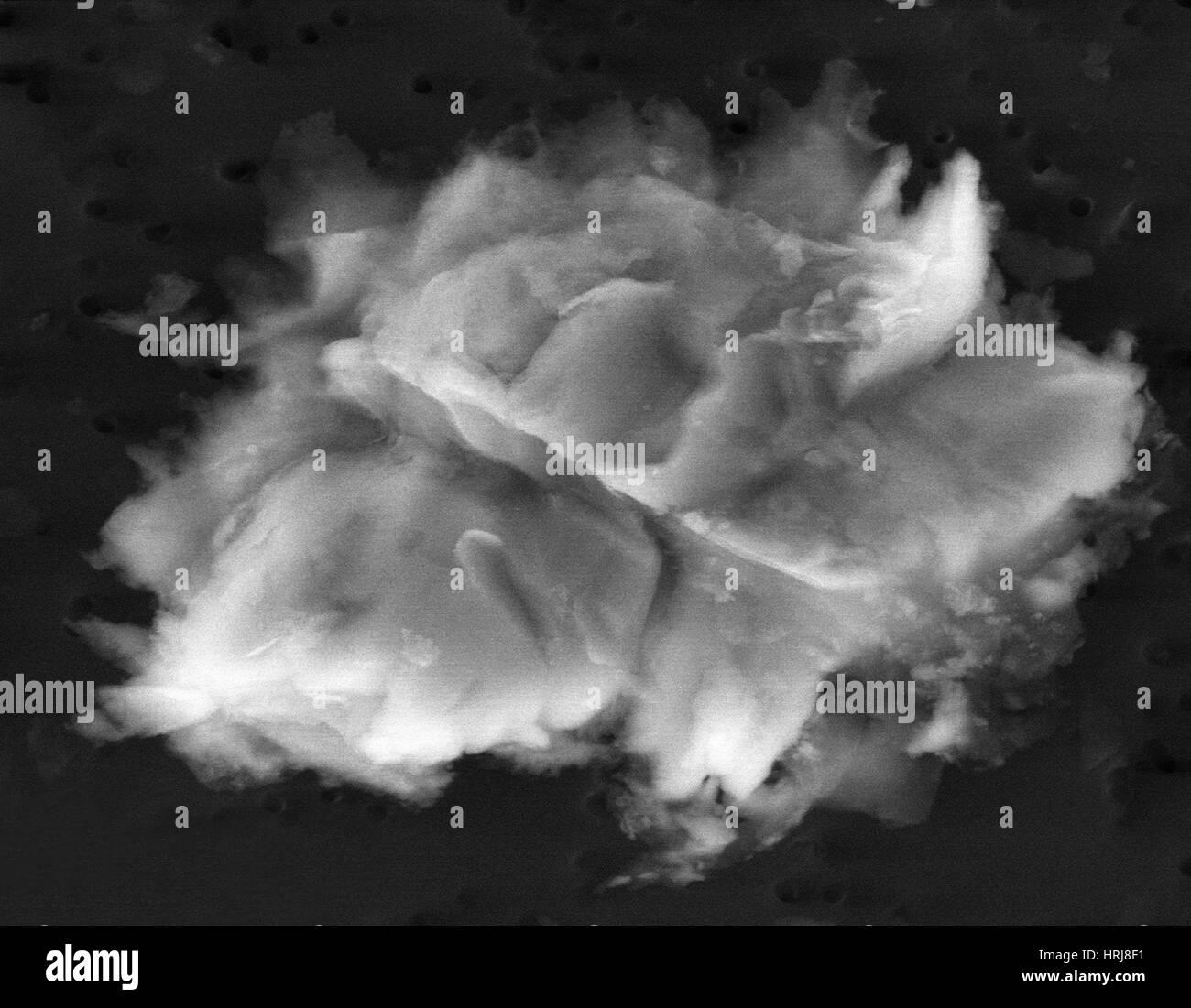 Lake Vostok Micro-Organism, SEM - Stock Image
