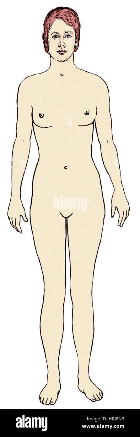 Female, Full Anterior View - Stock Image