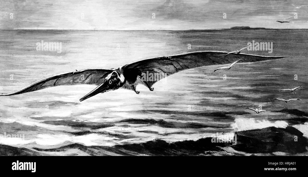 Ornithostoma, Extinct Flying Reptile - Stock Image