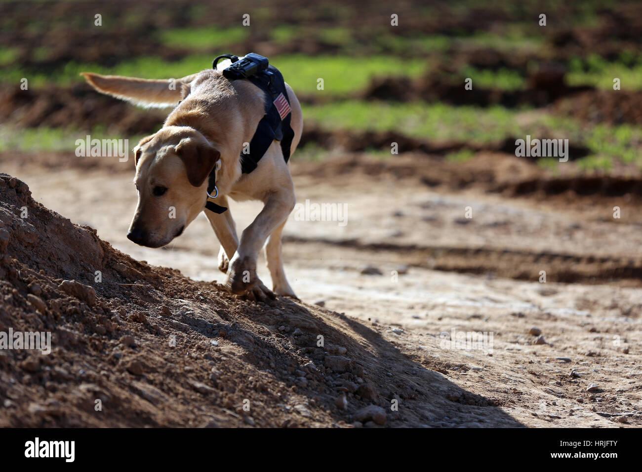 U.S. Marine Corps Dog - Stock Image