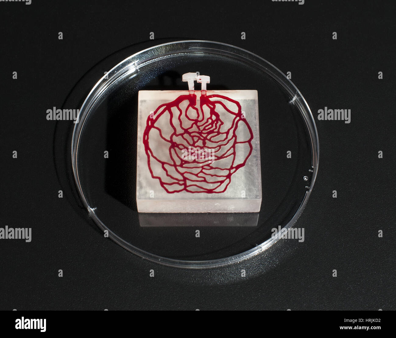 3-D Printed Tissue Simulation, 2015 - Stock Image