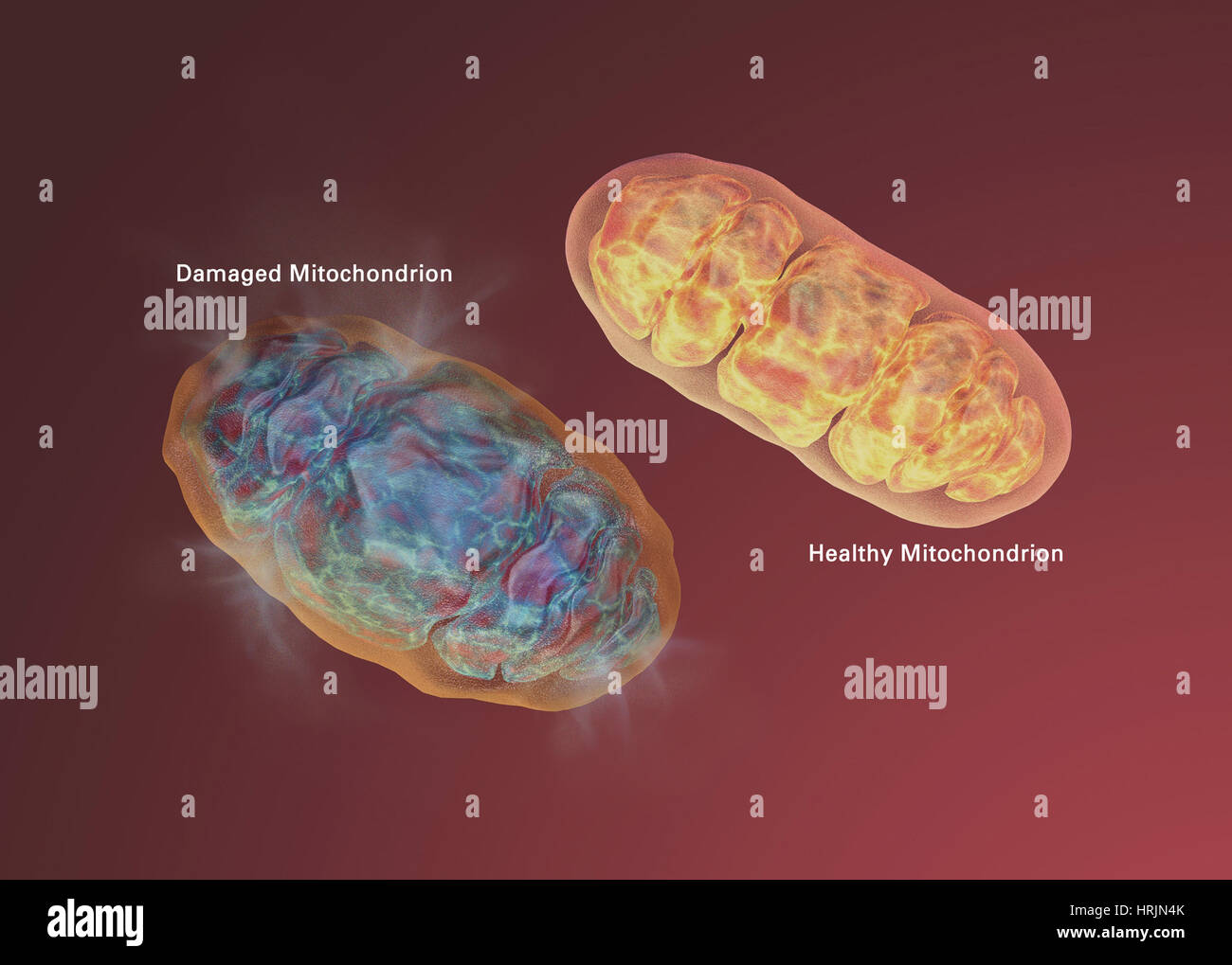 Alzheimer's Disease, Mitochondrial Dysfunction - Stock Image