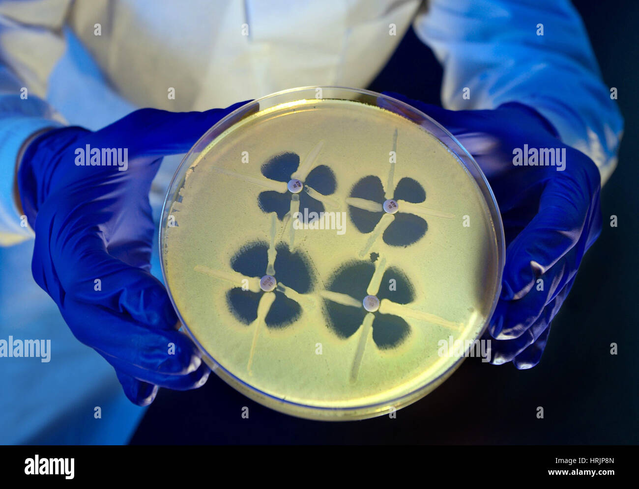 Antibiotic-Resistant Research, 2014 - Stock Image