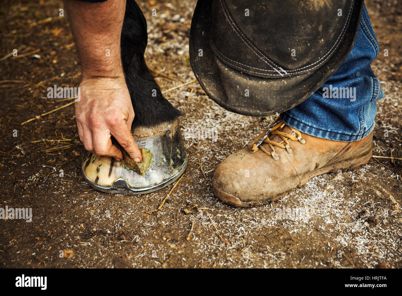 a man oiling and polishing the feet of a horse iwth a rag stock