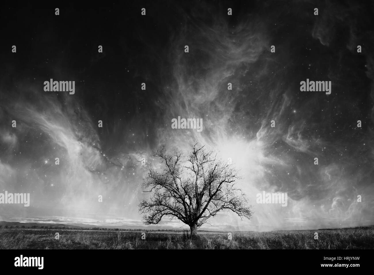 abstract high contrasted tree over the cosmic sky- elements of this image are furnished by NASA - Stock Image
