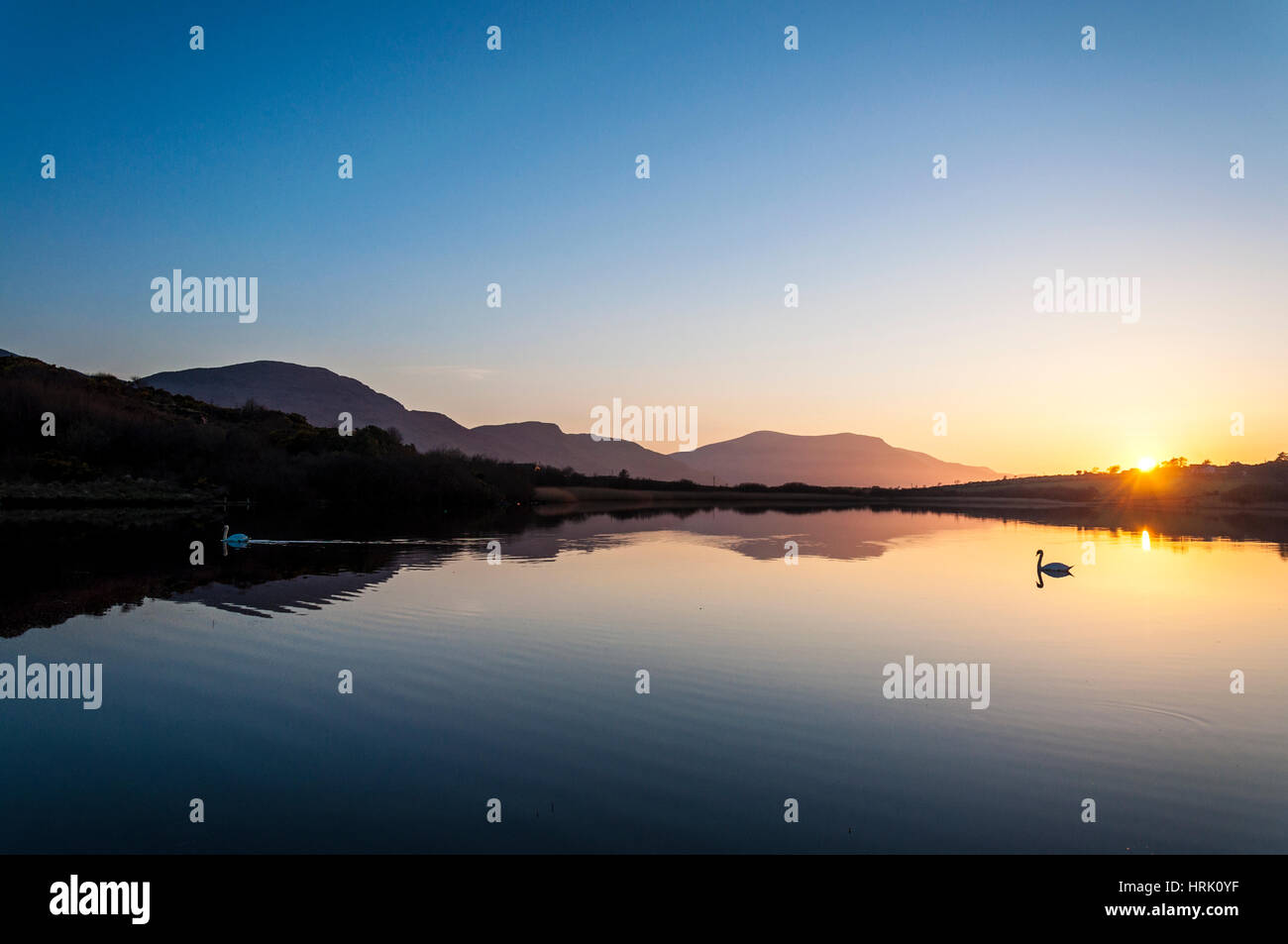Calm still tranquil lake with swans at sunset - Stock Image
