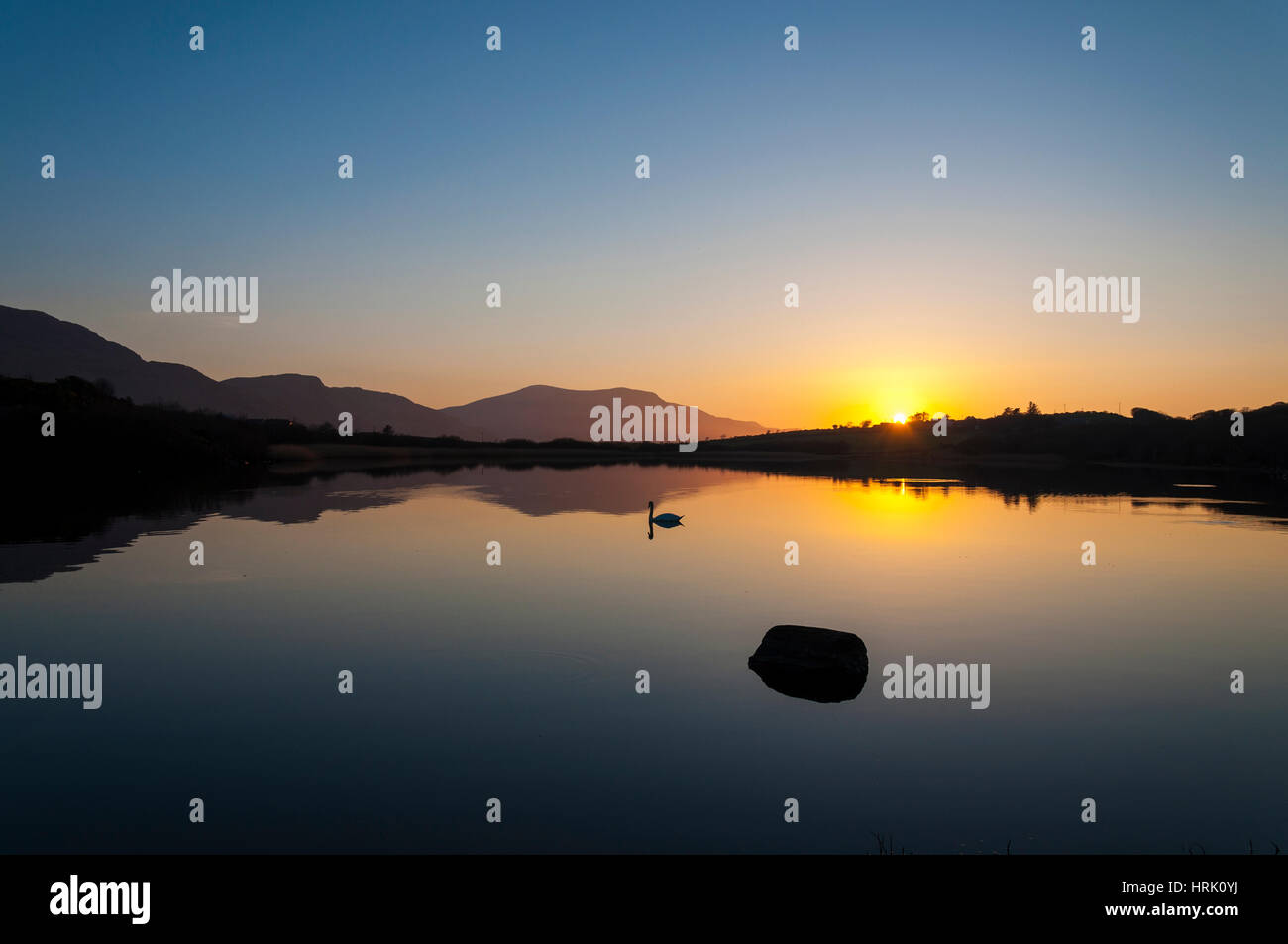 Calm still tranquil lake with swan at sunset - Stock Image