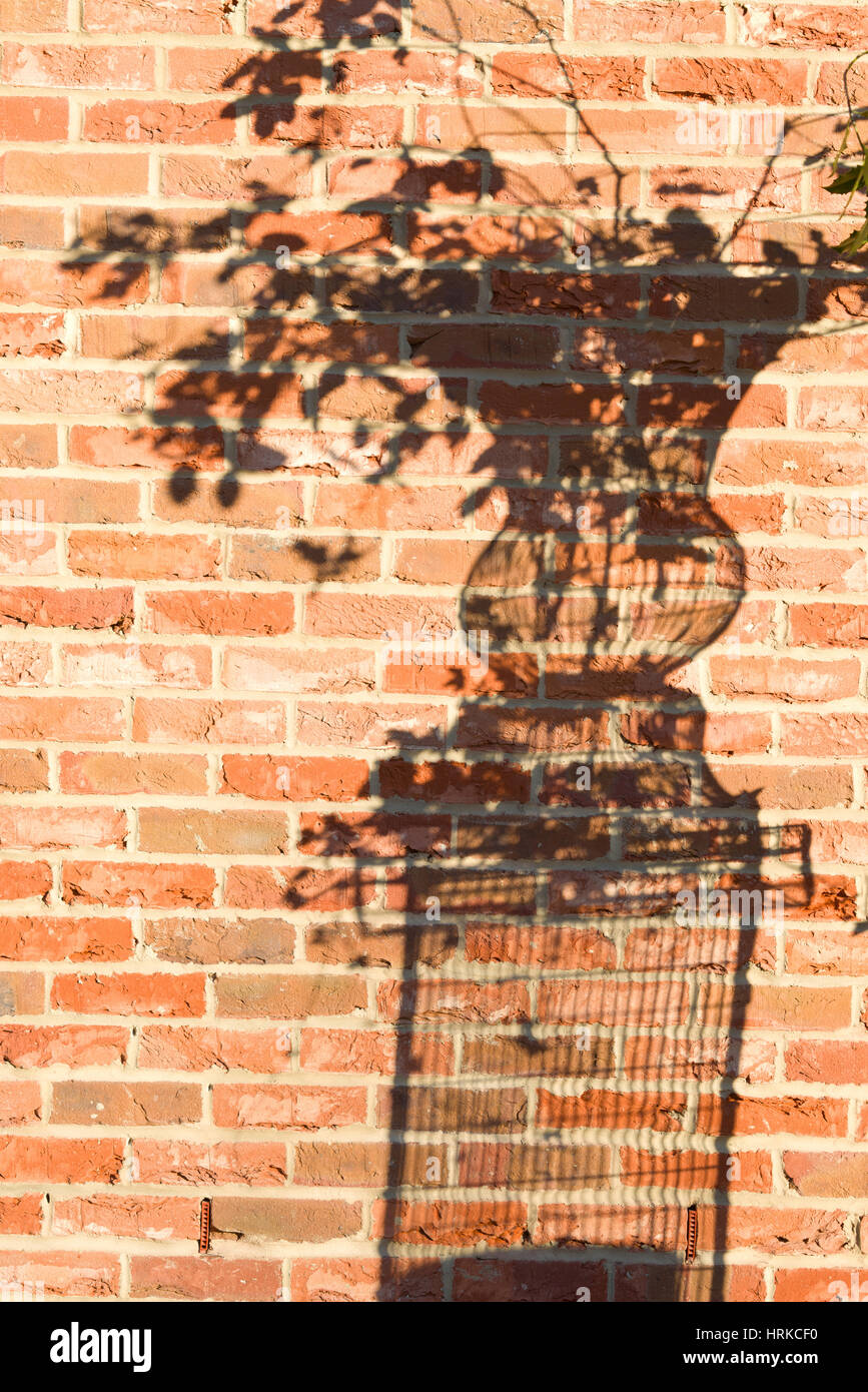 shadow of a plant pot or urn against a brick wall - Stock Image