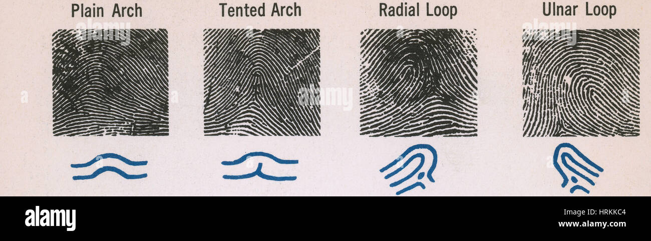 Fingerprint Patterns Stock Photo 60 Alamy Gorgeous Fingerprint Patterns
