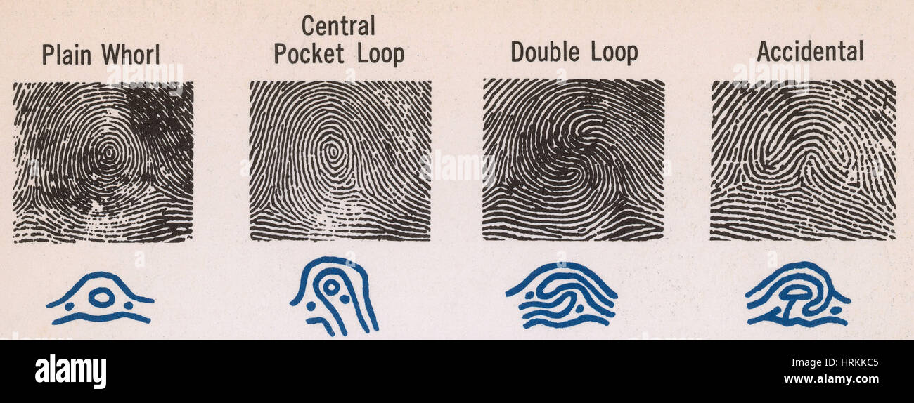 Fingerprint Patterns Stock Photo 60 Alamy Best Fingerprint Patterns