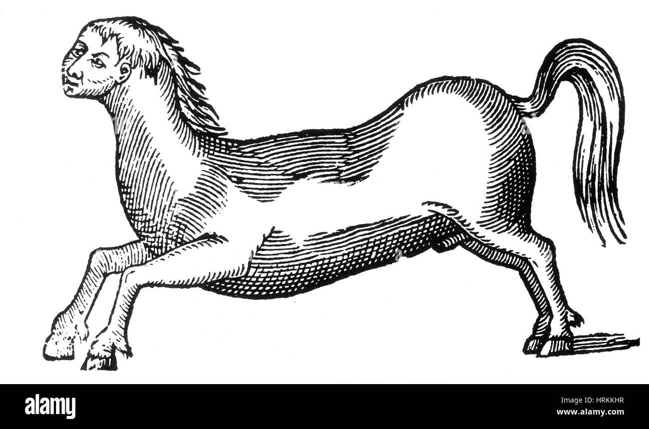 Human Monster, 16th Century - Stock Image