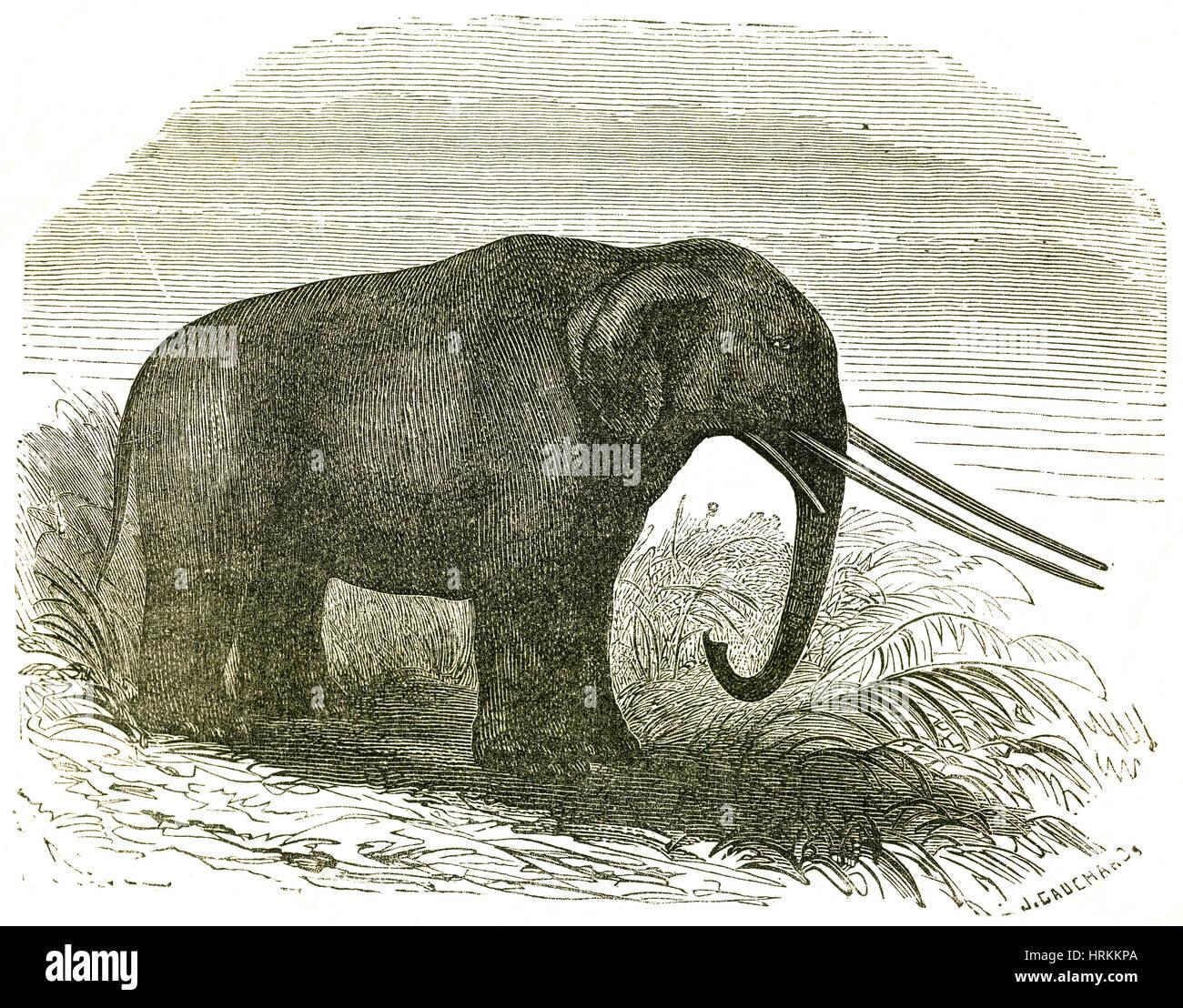 Mastodon - Stock Image
