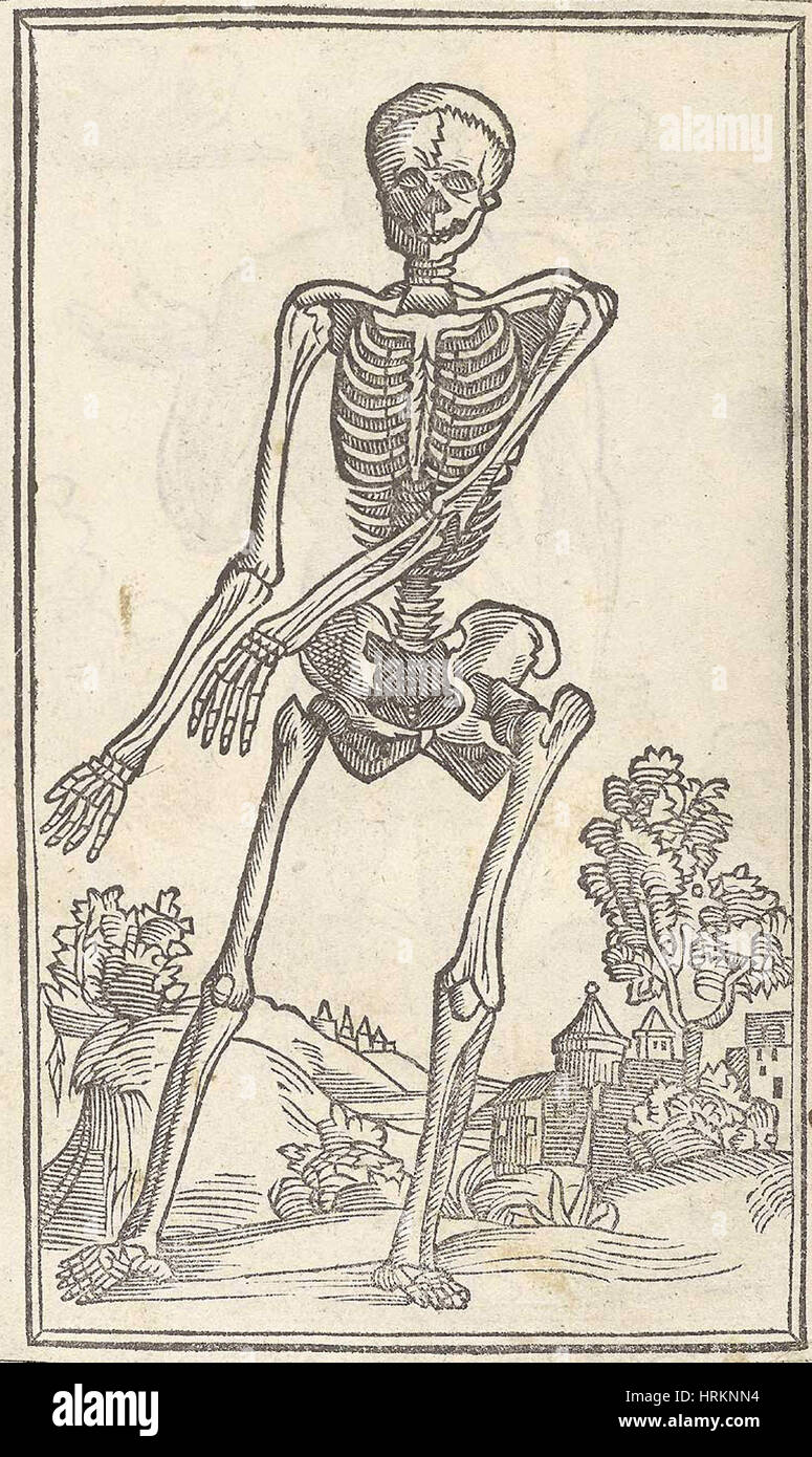 Historical Anatomical Illustration Stock Photo