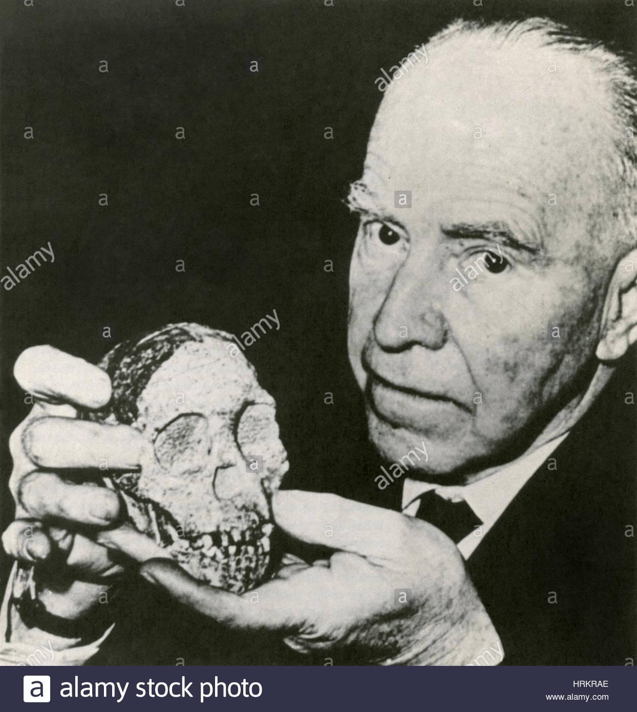 Raymond Dart with Taung Child Skull - Stock Image