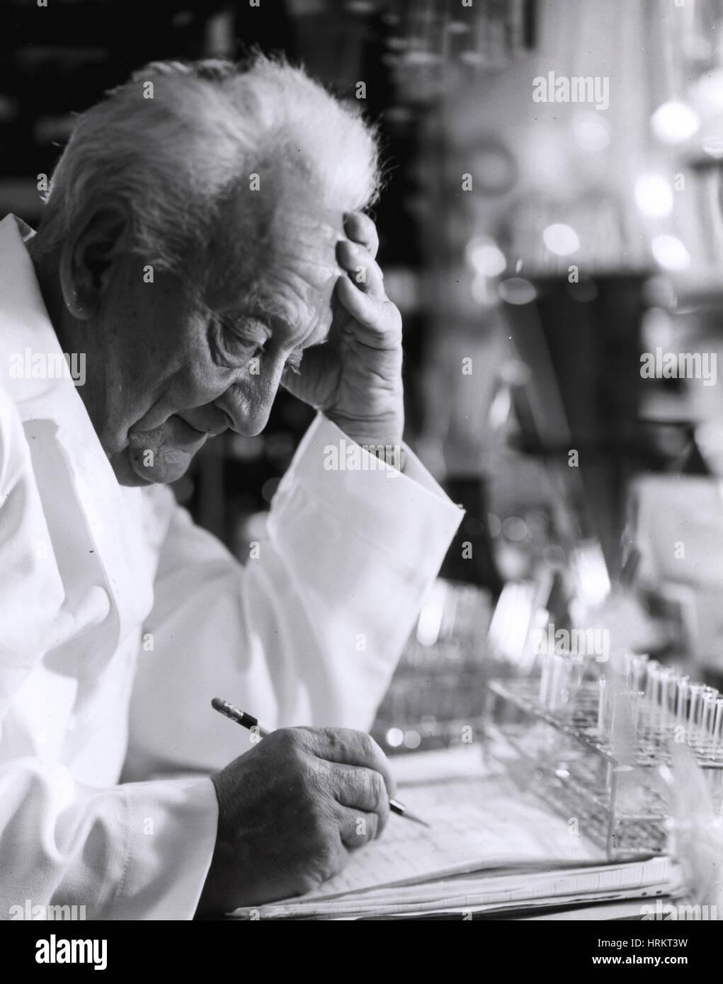 A. Szent-Gyorgyi, Hungarian-American Biochemist Stock Photo
