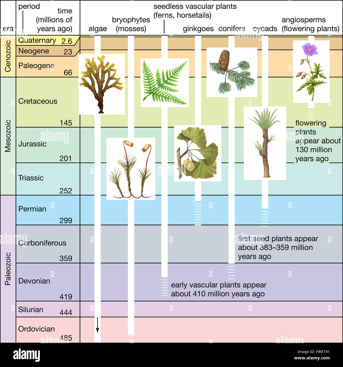 Significant events in plant evolution. geologic time scale, geochronology - Stock Image
