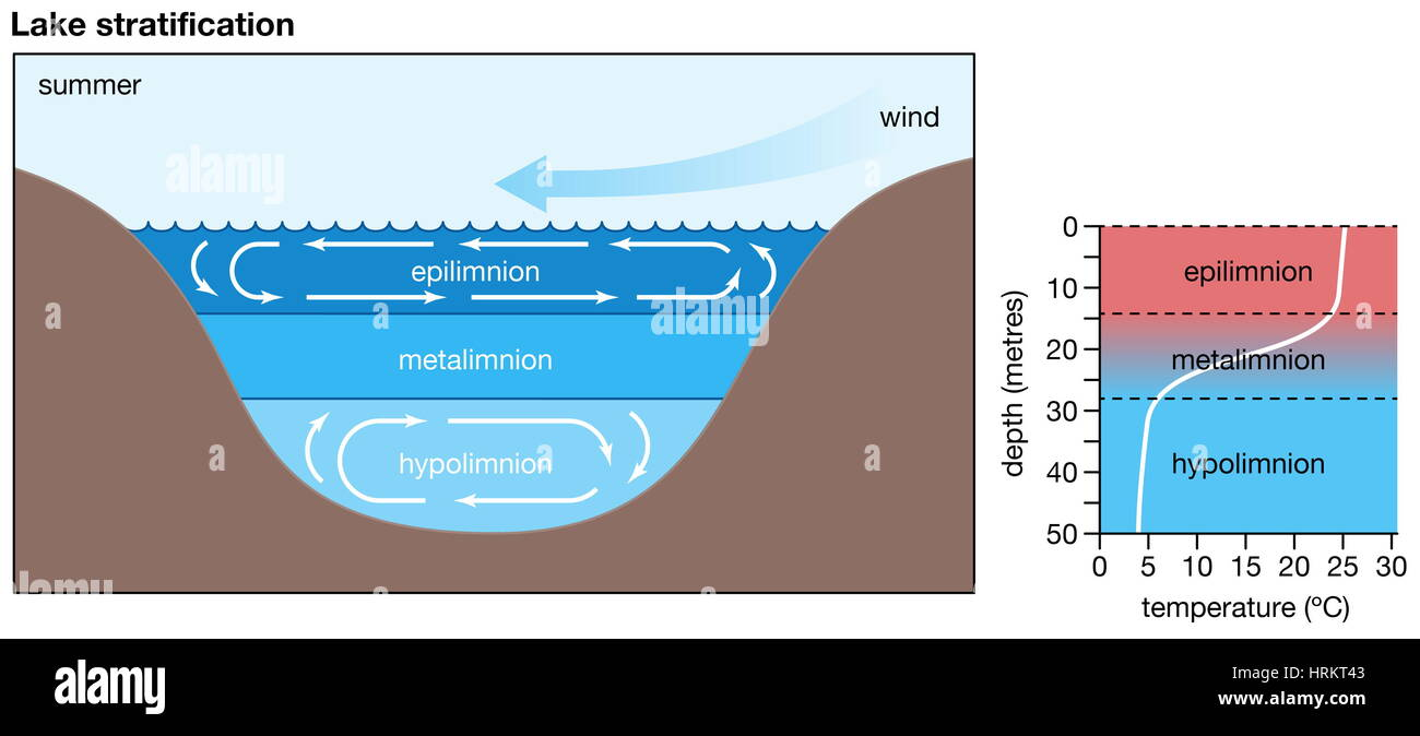 Lake stratification. The division of a lake between the epilimnion, metalimnion, and hypolimnion. biosphere, inland - Stock Image