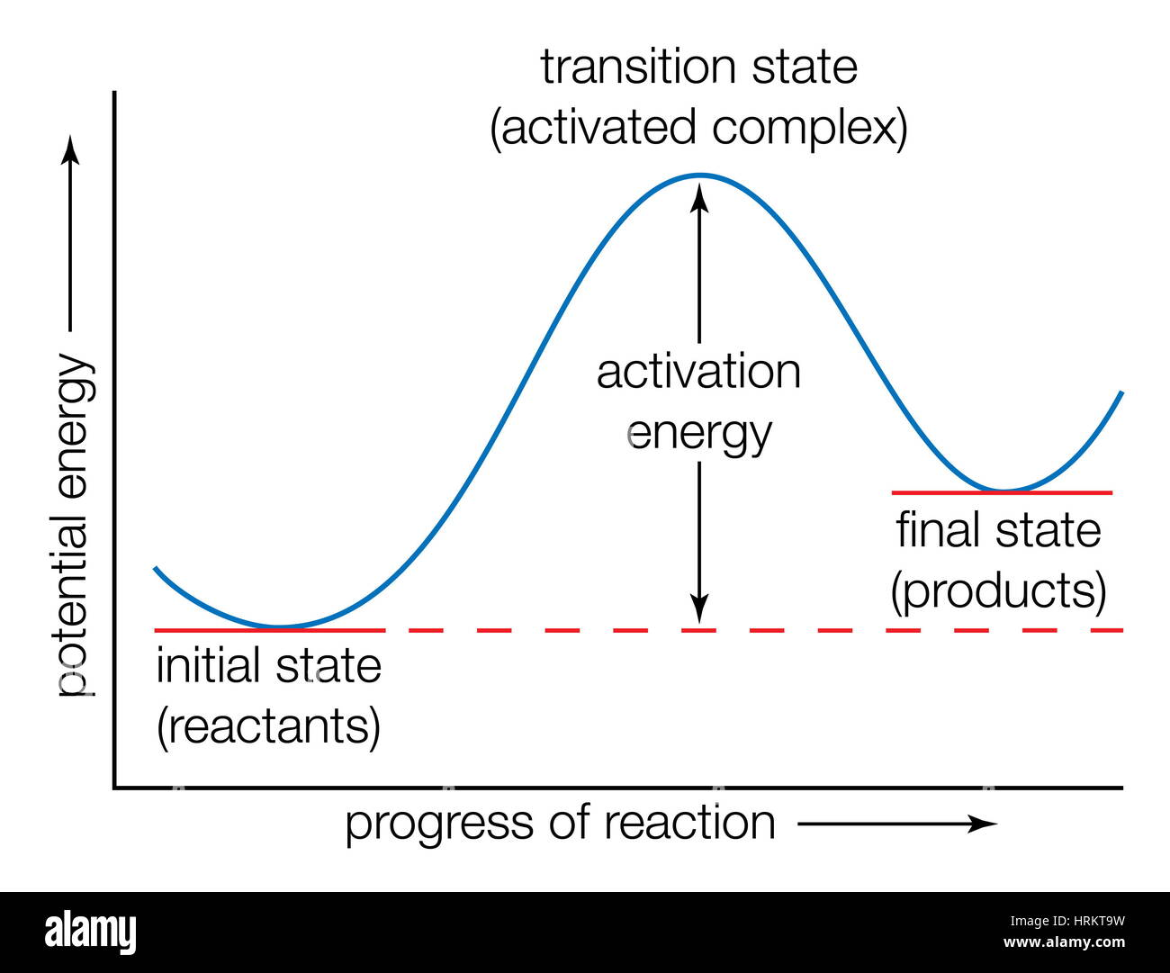 Potential energy curve. Energy transition states, progress of reaction, transition-state theory, activated-complex - Stock Image