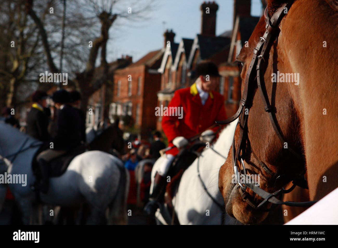 A group of horses and riders gathered in Tenterden, Kent, England, and waiting  for the annual Boxing Day hunt to Stock Photo