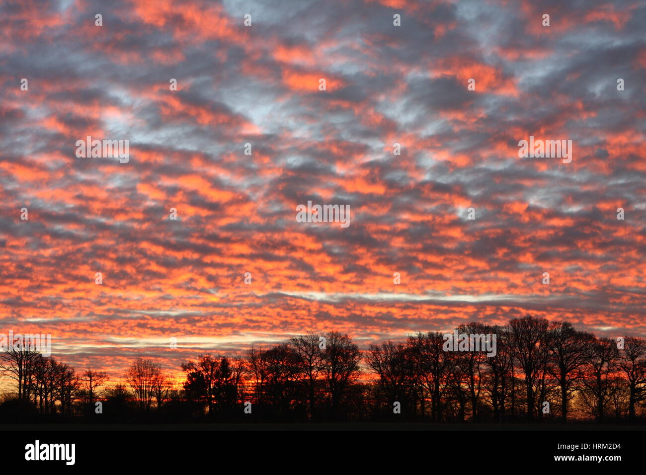 A treeline and sky just before a winter sunrise in Wittershaam, Kent, England. Stock Photo