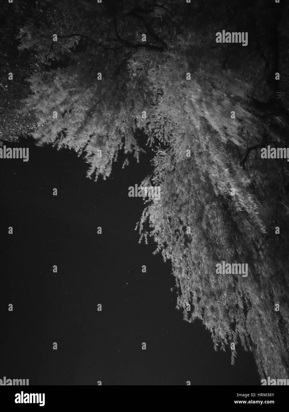 Low angle view shot of tree in night - Stock Image