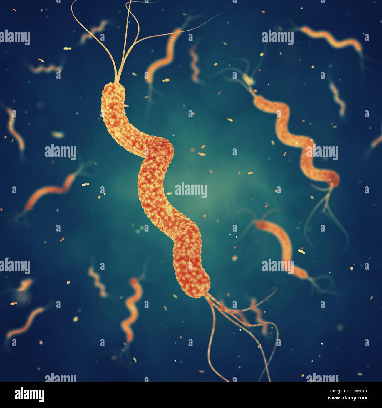 Spirillum bacteria , Germ infection , Epidemic bacterial disease - Stock Image