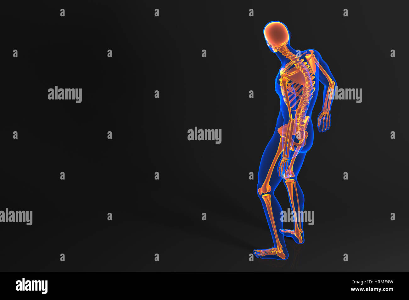 Anatomy human skull rear view stock photos anatomy human skull human skeleton rear view contains clipping path stock image ccuart Choice Image