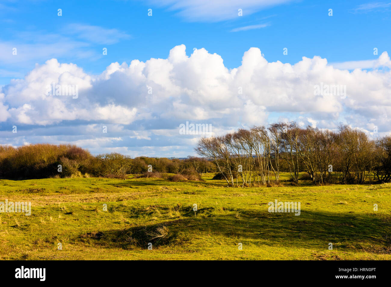 Braunton Burrows, Devon, England. Stock Photo