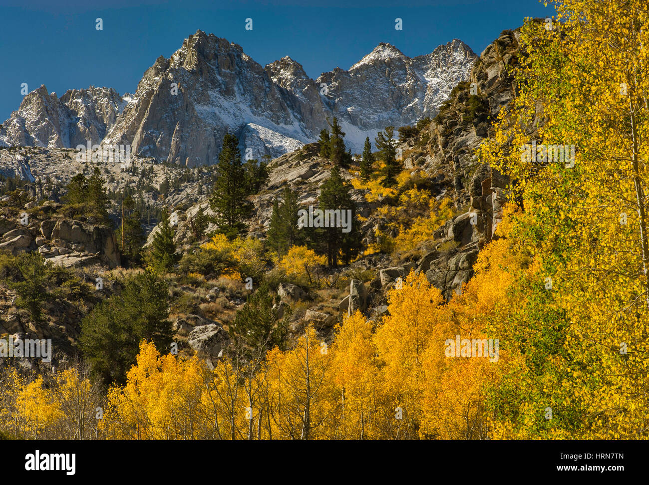 Picture Peak Mount Haeckel, Mount Wallace, fall foliage in Lake Sabrina Basin in Evolution Region, John Muir Wilderness, - Stock Image