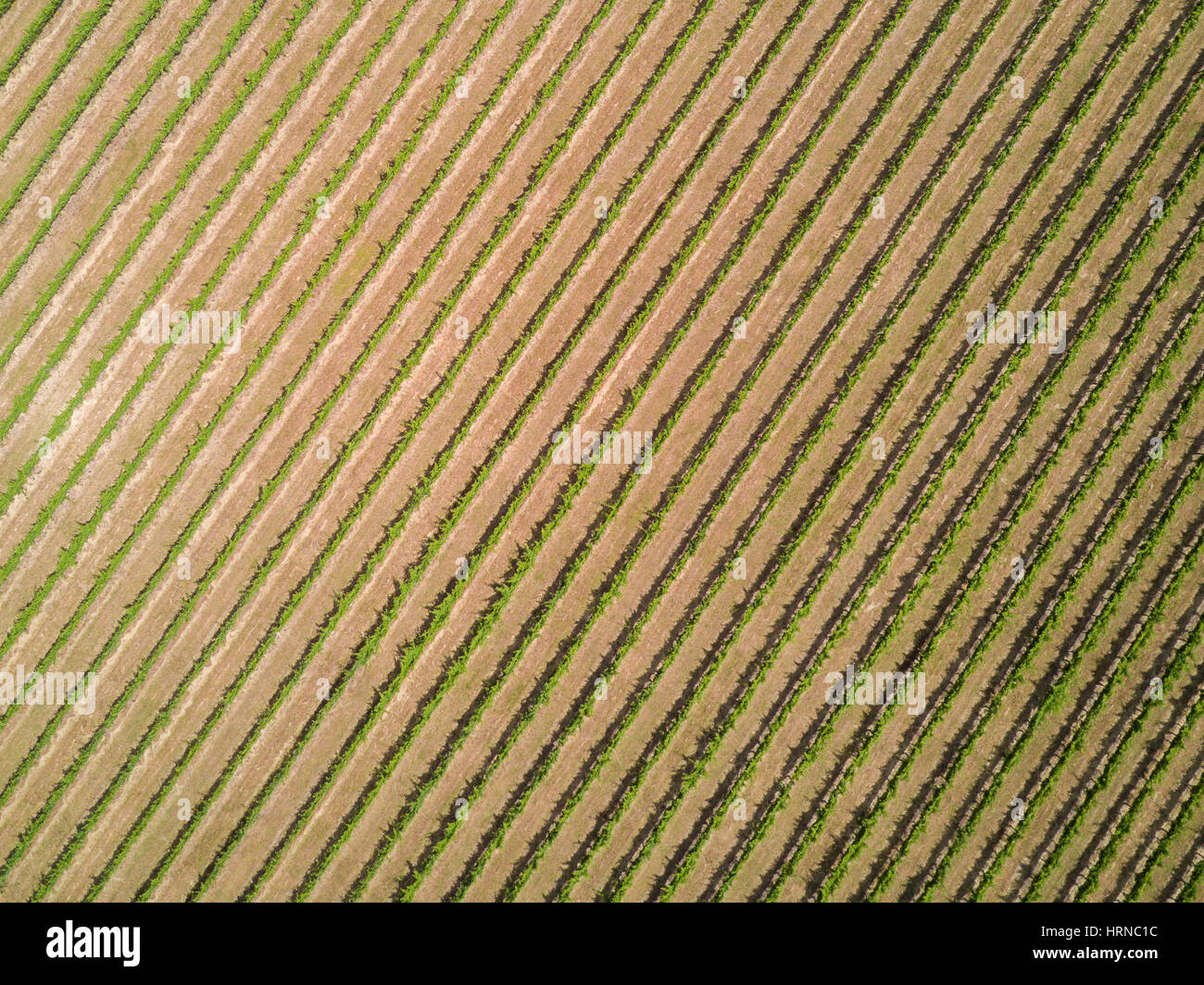 Aerial view directly above a vineyard in Yarra Valley, Melbourne, Australia. A famous wine region that produces - Stock Image
