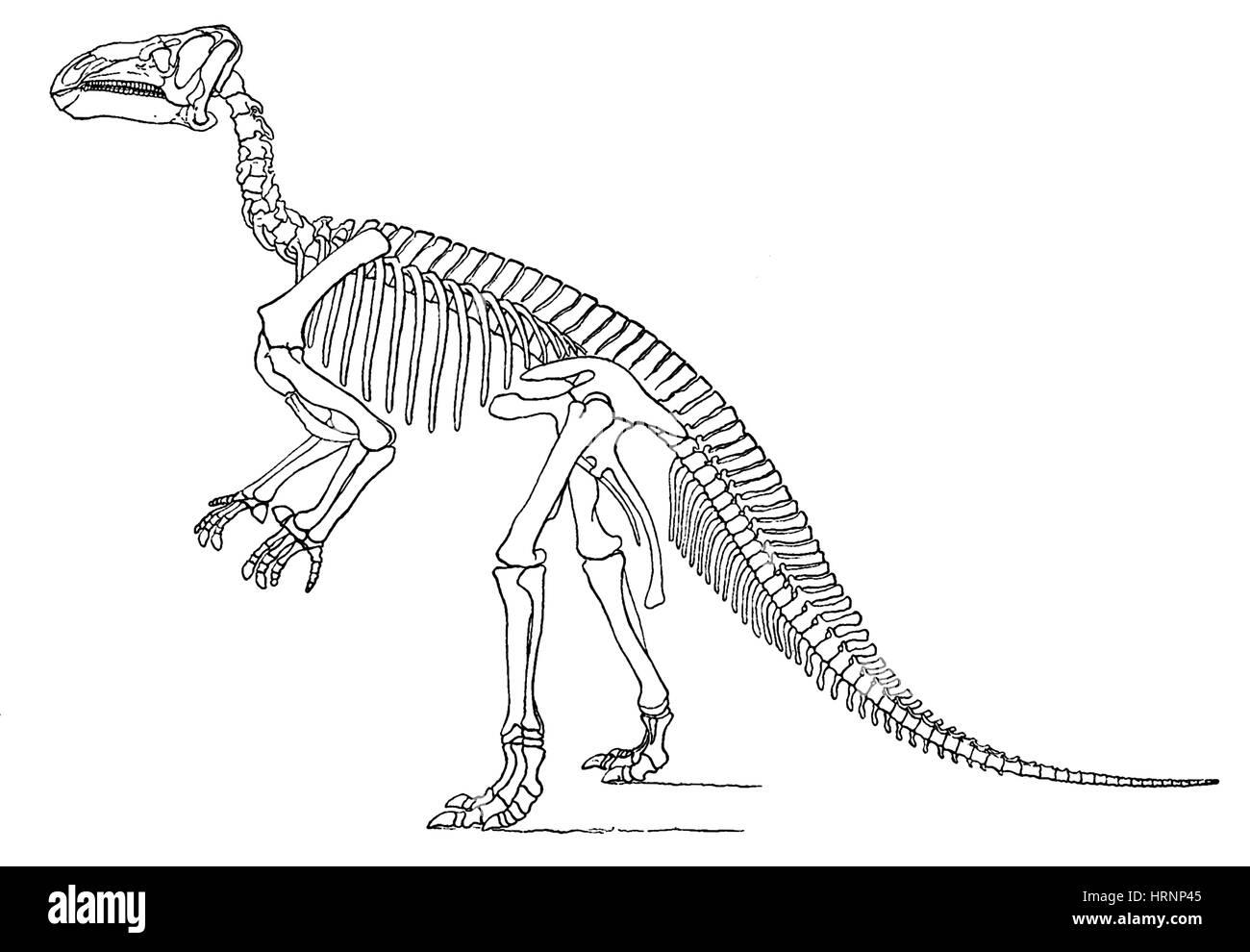 Iguanodon, Mesozoic Dinosaur - Stock Image
