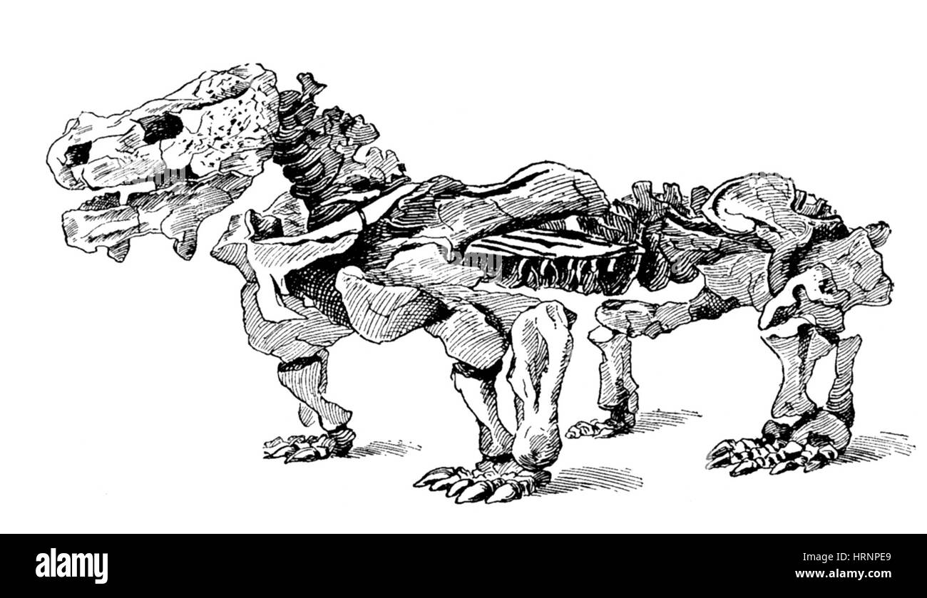 Pareiasaurus - Stock Image