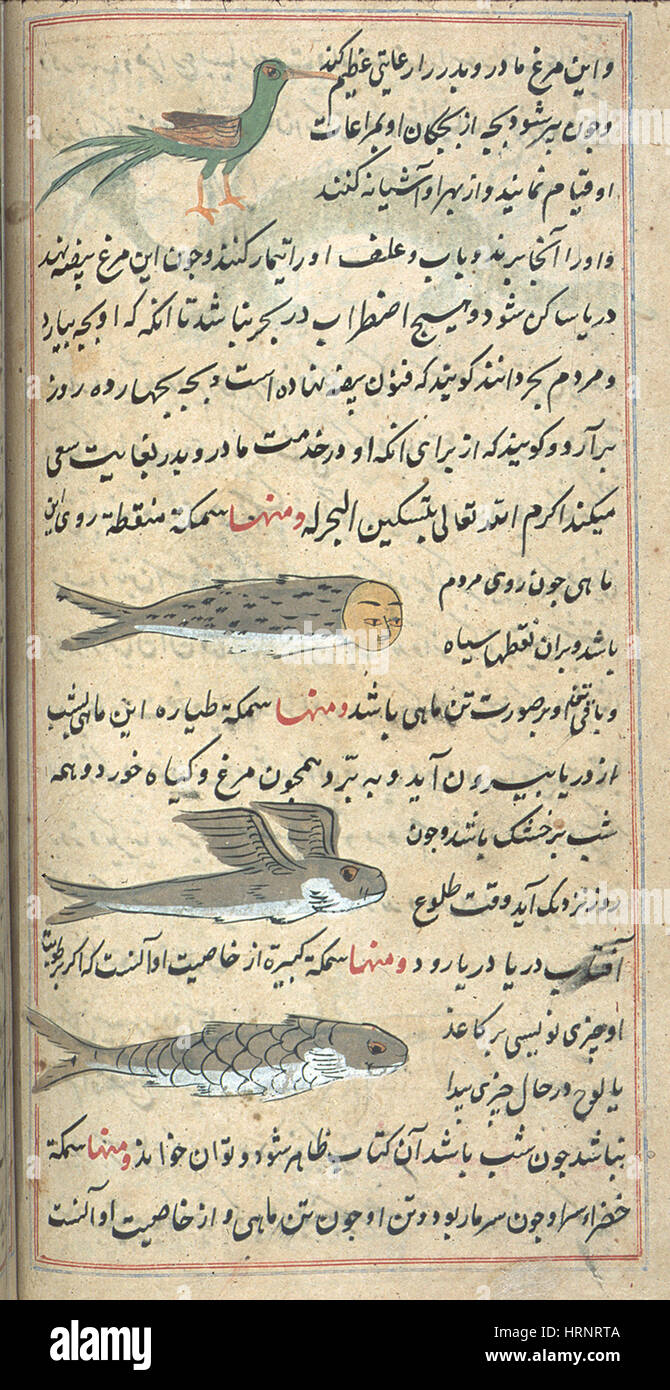 Islamic Mythical Creatures, 17th Century - Stock Image