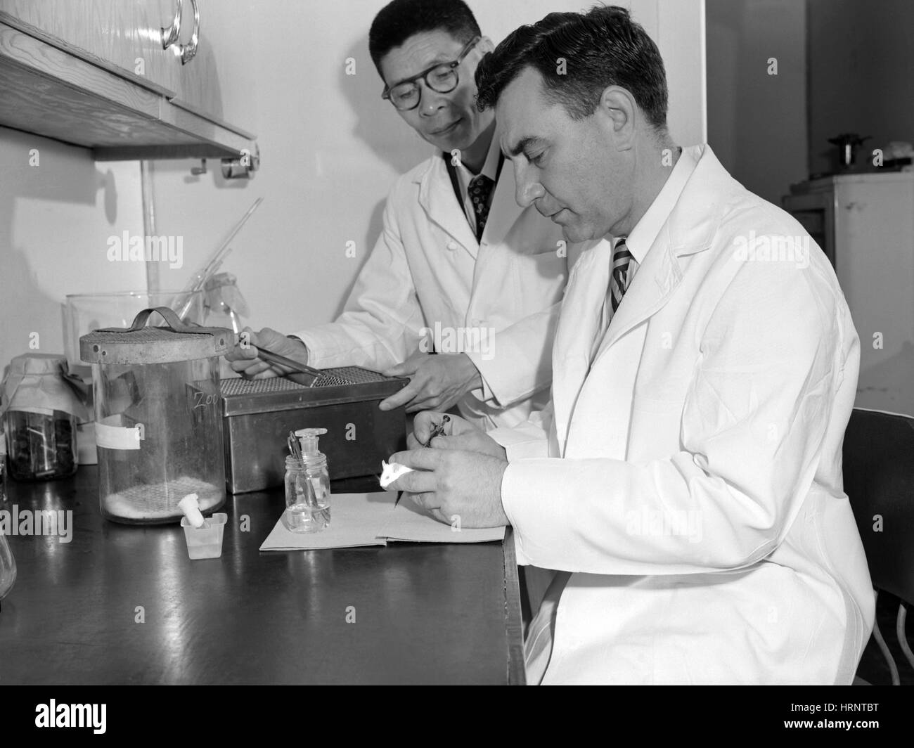 Polio Research, 1953 - Stock Image