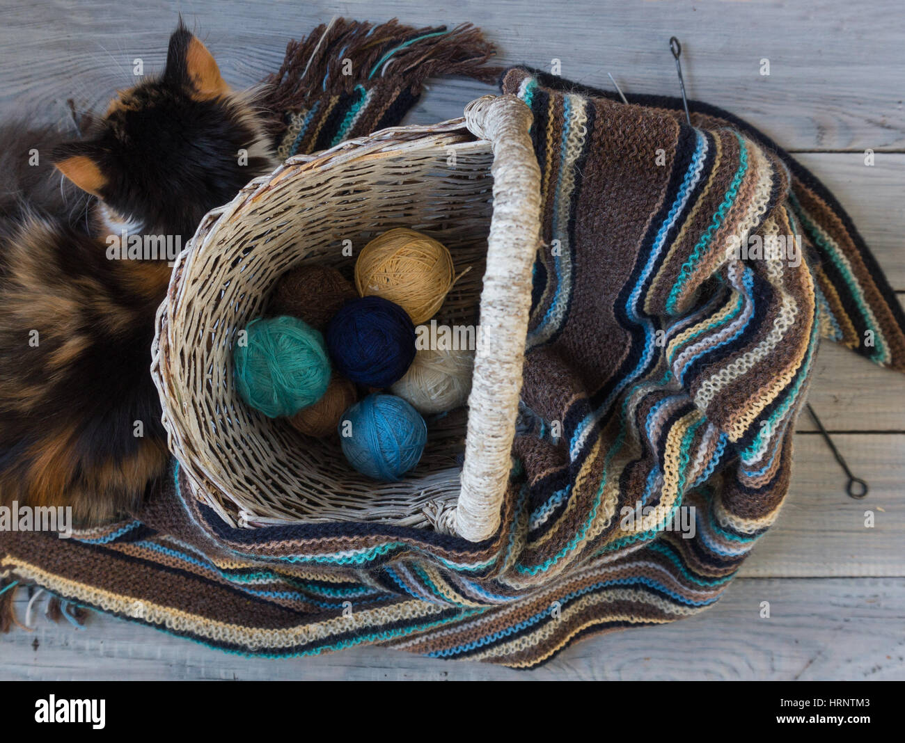 Knitted woolen scarf and yarn balls in a wicker basket on a wooden surface. Nearby lies fluffy cat - Stock Image