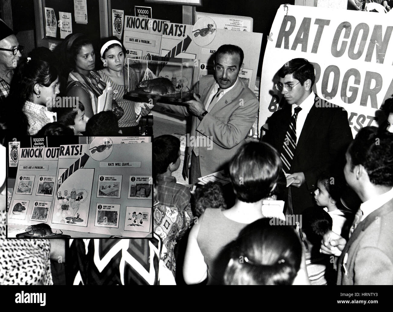 Campaign Against Rats, 1952 - Stock Image