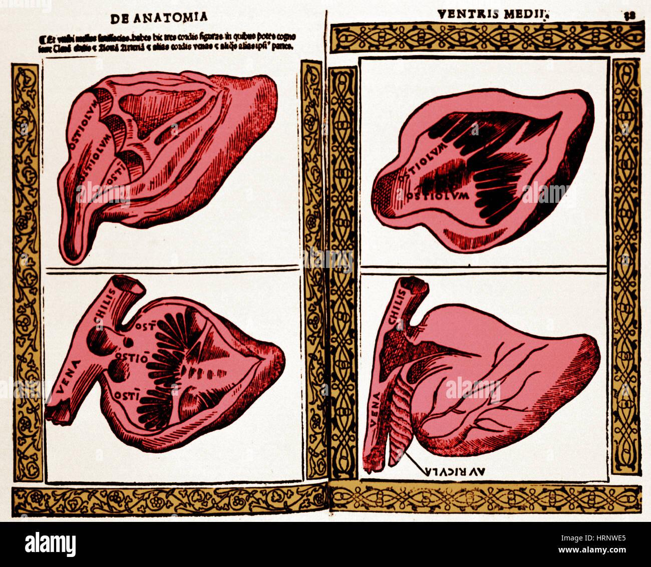 Heart Illustration, 1523 Stock Photo