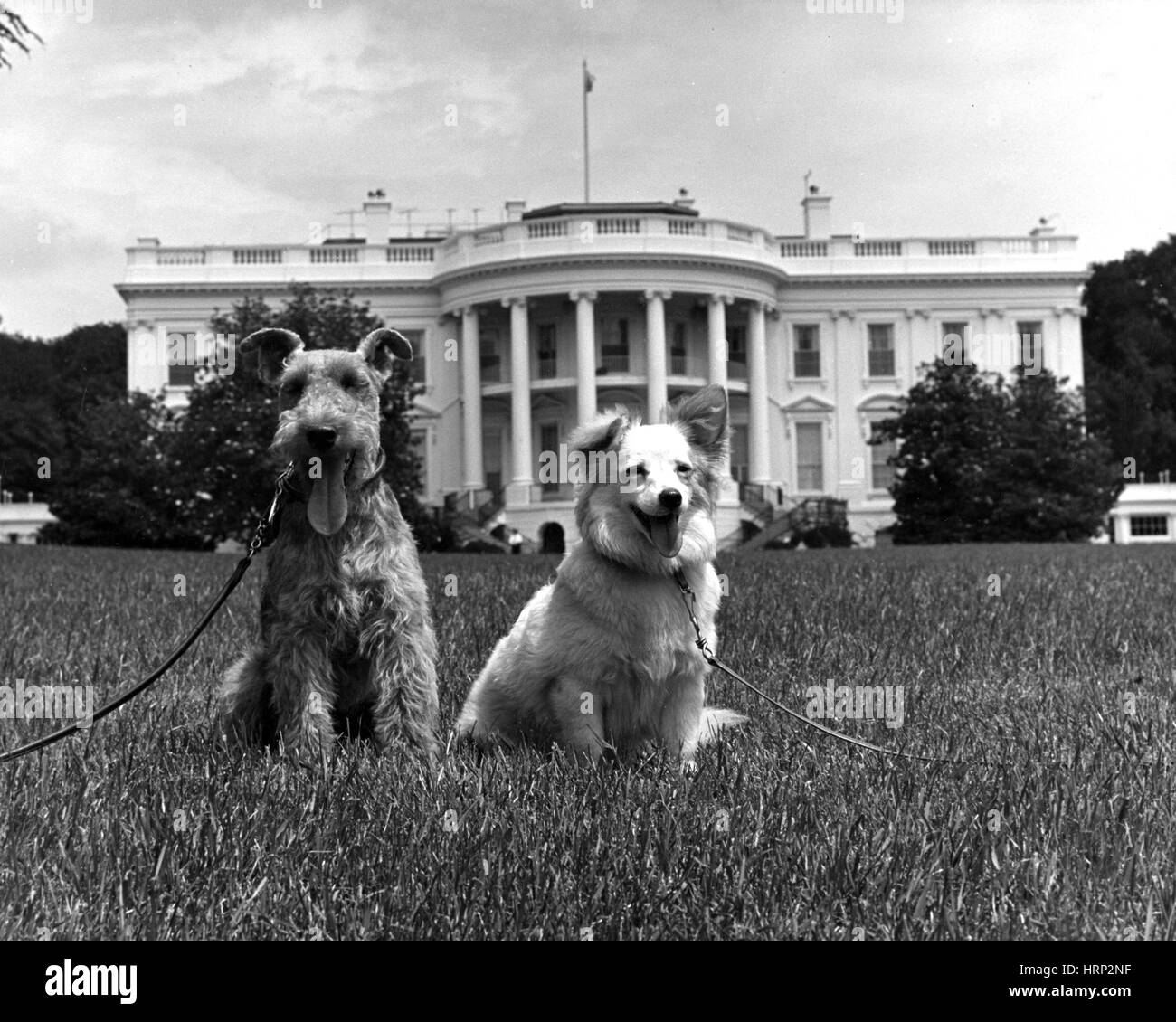 Charlie and Pushinka, Kennedy Dogs, 1961 - Stock Image