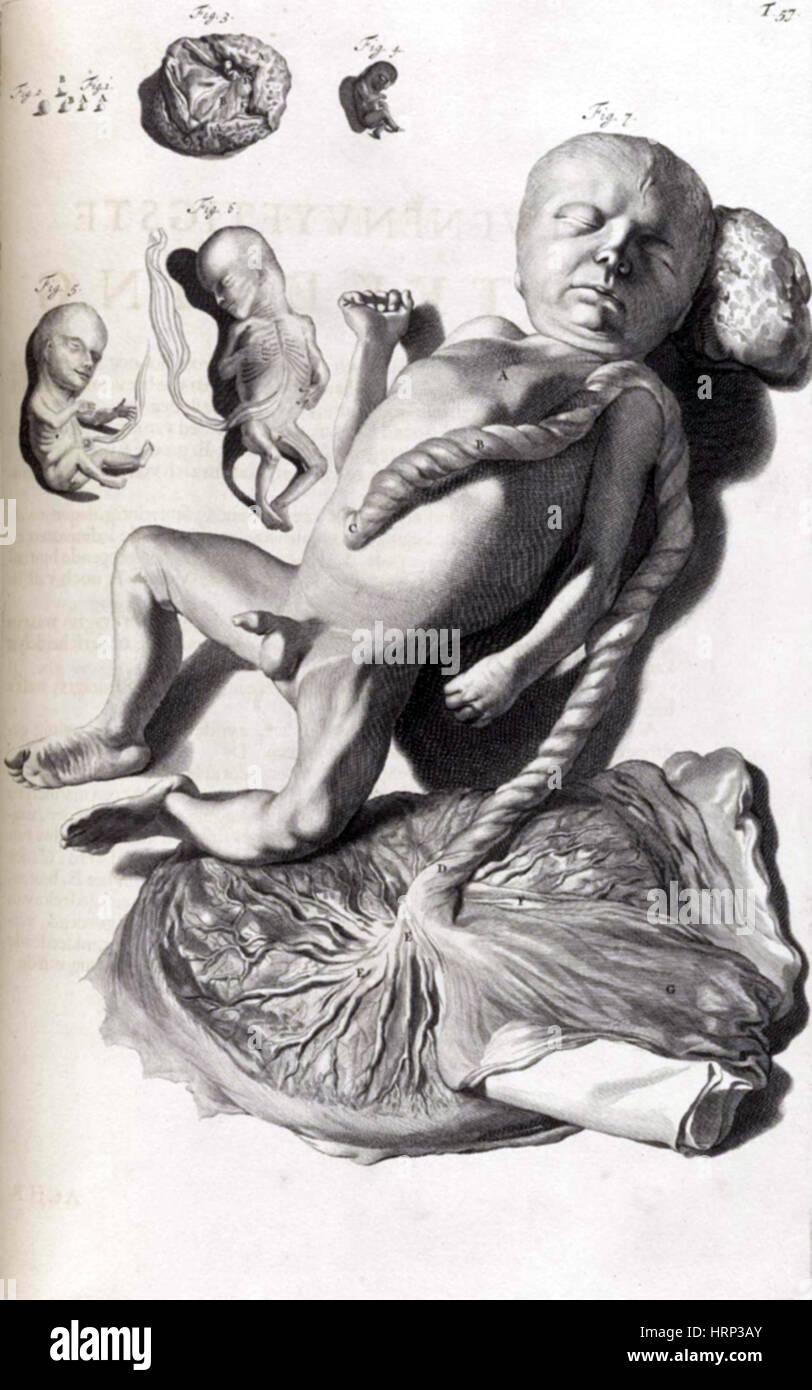 Anatomia humani corporis, Table 57, 1690 - Stock Image