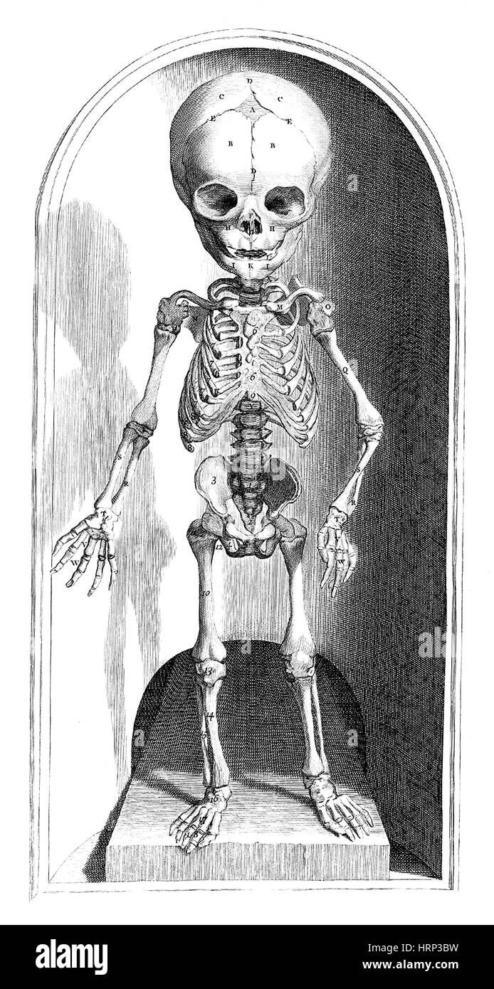 Anatomia humani corporis, Table 101, 1690 Stock Photo