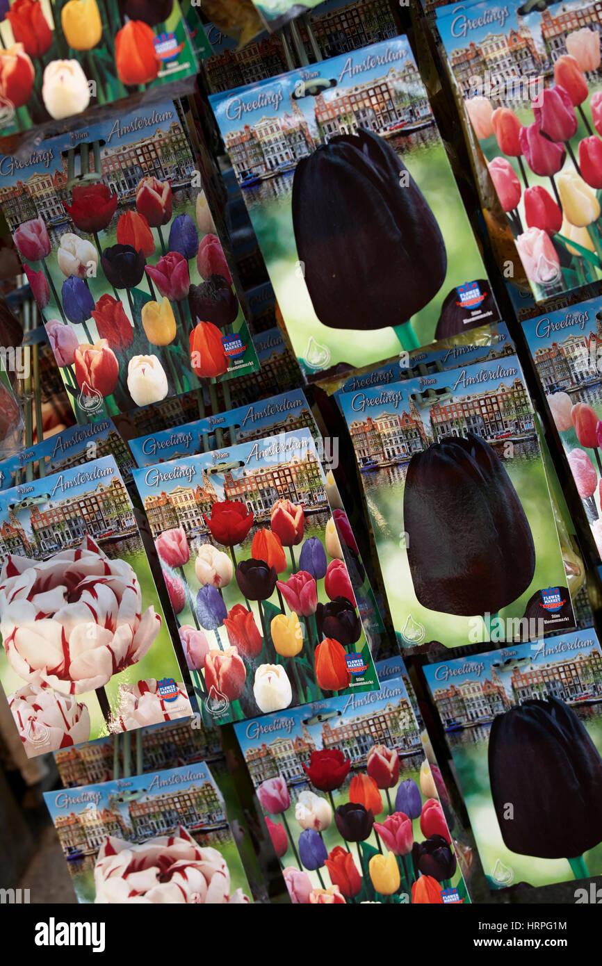 Tulip Seeds Stock Photos Tulip Seeds Stock Images Alamy