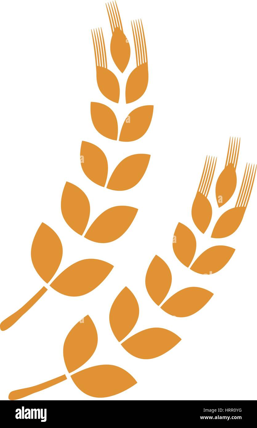 Wheat natural food - Stock Vector