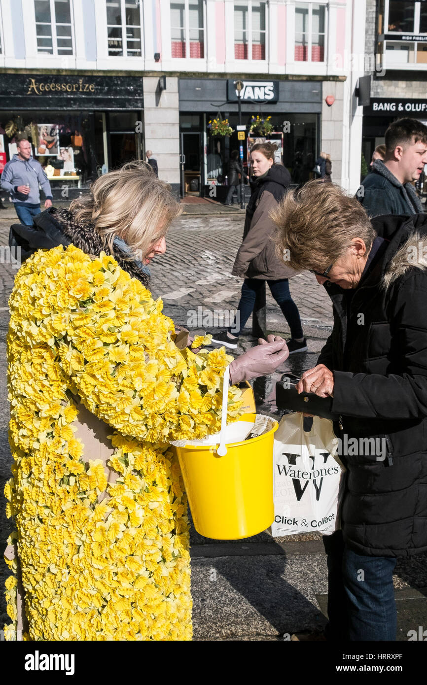 Marie Curie Charity Daffodil Appeal woman daffodils collecting donations street Truro Cornwall UK - Stock Image